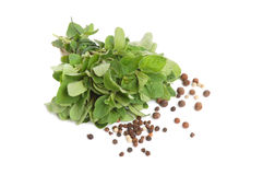 Marjoram and peppercorns Royalty Free Stock Photo