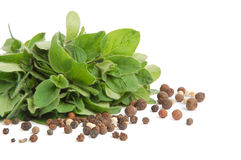 Marjoram and peppercorns Royalty Free Stock Photography