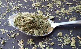 Marjoram on spoon over kitchen table. Fresh garden herbs. royalty free stock images