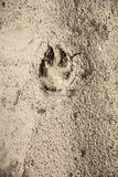 The mark of the beast on the sand. Royalty Free Stock Photography