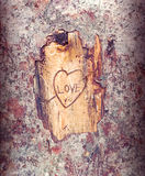 The mark of love. Drawing a heart in the bark of a tree Royalty Free Stock Images