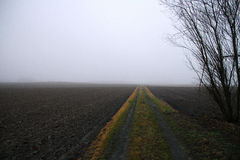 Mark path in winter fog Royalty Free Stock Images