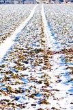 Mark of tire on snow field in winter Royalty Free Stock Photography