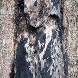 Mark on tree bark Royalty Free Stock Photos