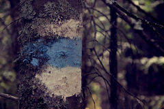 The mark on the tree is blue. Summer royalty free stock images