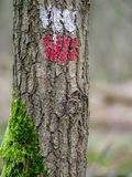 Mark on a tree of a long distance walking path stock image