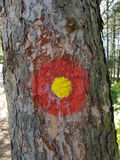 Mark on a tree. Red and yellow mark found on a tree in a forest Stock Image