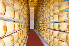 The marked cheese wheels Stock Image