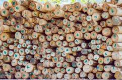 Marked Chopped Trees Royalty Free Stock Photo