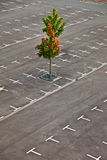 Marked parking lot without cars Royalty Free Stock Photos