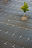 Marked parking lot without cars Royalty Free Stock Image
