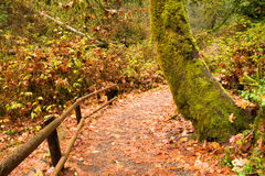 Marked Path Rainforest Trail Pacific Northwest Royalty Free Stock Photo