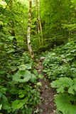 Marked trail through the forest Royalty Free Stock Photo
