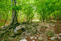 Marked trail on a mountain forest Stock Image