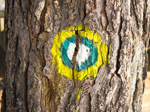Marked tree Stock Photography