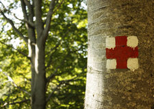 Marked tree in the forest Royalty Free Stock Photos