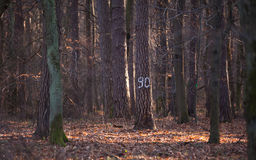 Marked Tree. A marked tree found in the forest on a sunny, chilly day Stock Photo