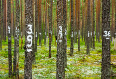 Marked trees for enviromental monitoring Stock Photo