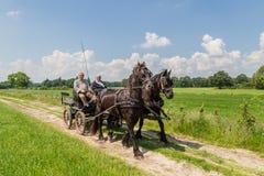 MARKELO NEDERLÄNDERNA - JUNI 3, 2016: Traditionell holländsk vagn fotografering för bildbyråer