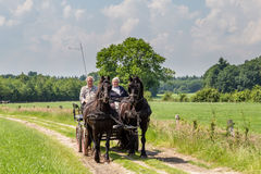 MARKELO, NETHERLANDS - JUNE 3, 2016:Traditional Dutch carriage. Two older man in a traditional Dutch carriage  with two black Frisian horse in agricultural area Royalty Free Stock Photo
