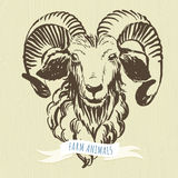 Marker hand-drawn farm animals: ram (sheep). Stock Photo