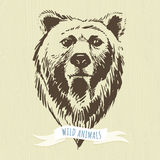 Marker hand-drawn forest animals: bear Royalty Free Stock Images