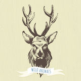 Marker hand-drawn forest animals: deer Stock Images