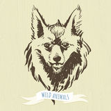 Marker hand-drawn forest animals: fox Stock Image
