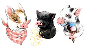 Marker illustration collection of mini pigs with ice cream, sparkler, shawl stock illustration