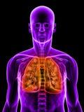 markerad lung Fotografering för Bildbyråer