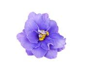 Markerad purpurfärgad violet Arkivfoton
