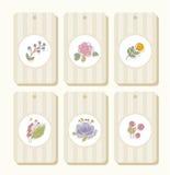 Markeringen, etiketten, bloemen, installaties, beige bessen, gestreept, Stock Foto's