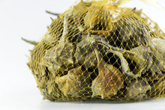Market bag of Bolinus brandaris, an edible marine gastropod Stock Images