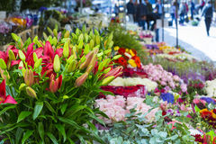 Market day with lots of spring flowers on sale. Pansies in diffe Royalty Free Stock Photo
