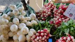 Market day in Tournon France. Fresh onions and radishes Stock Photos