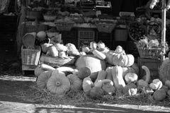 Orange pumpkins, vegetables Stock Photography