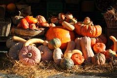 Orange pumpkins, vegetables Stock Images