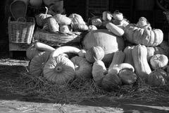 Orange pumpkins, vegetables Stock Image