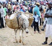 Market Donkey Stock Image