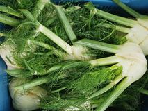 Market Fennel Royalty Free Stock Images