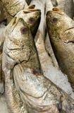 Market fish Royalty Free Stock Photos