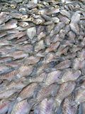 Market fish. Pile of gutted and deheaded fish in a Thai market Royalty Free Stock Image
