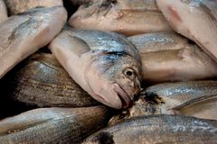 Market fish close-up Royalty Free Stock Photography