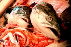 Market Fish. Scraps of fish for sale, watched over by their former heads at a Sunday market Royalty Free Stock Images