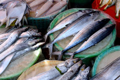 Market fishing selling. Kinds of fish selling in market, shown as different, various and market business dealing Royalty Free Stock Image