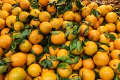 Market fresh oranges. Pile high for sale to consumers of healthy fresh food royalty free stock images