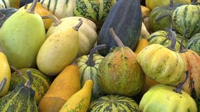 Market with fresh pumpkins, gourds and courgettes Cucurbita pepo Pattypan or white squash, high quality natural. Vegetables, excellent varieties, healthy stock footage