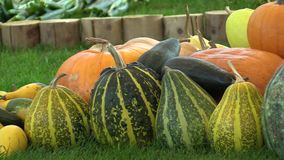 Market with fresh pumpkins, gourds and courgettes, high quality natural vegetables, excellent varieties, healthy. Nutrition for vitality, European Union stock video