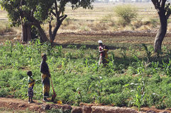 Market garden crops in Burkina Faso Royalty Free Stock Images