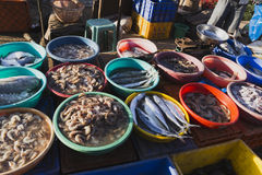 Market in Goa selling and buying fresh fish in ice packs Royalty Free Stock Photos
